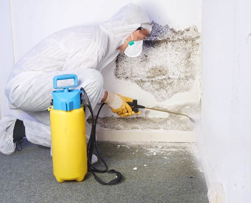 mould-removal4